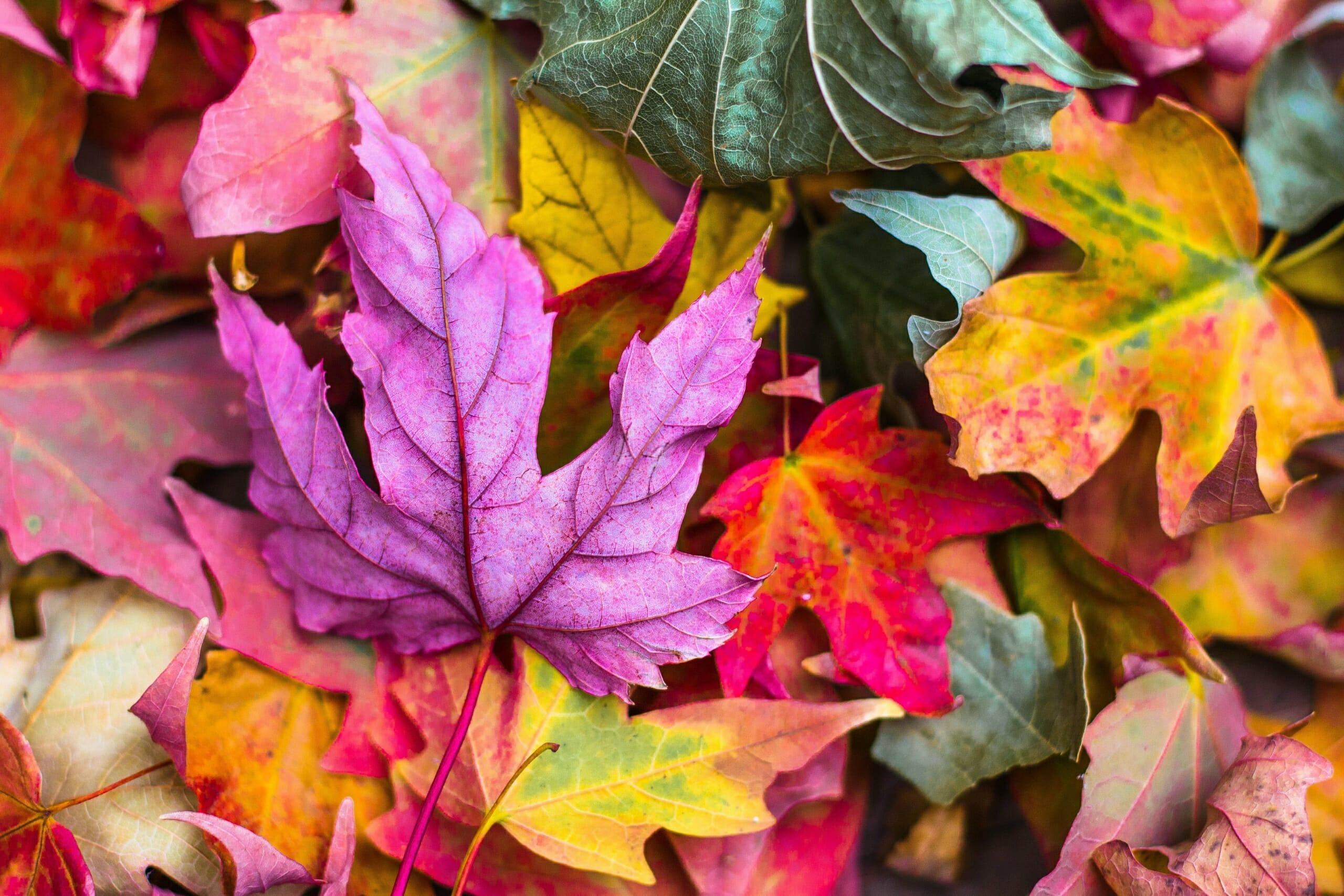 colori - foglie colorate